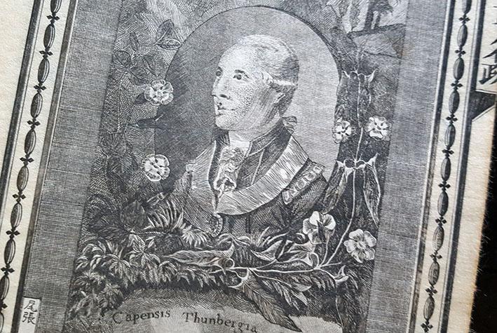 thunbergs graverade porträtt