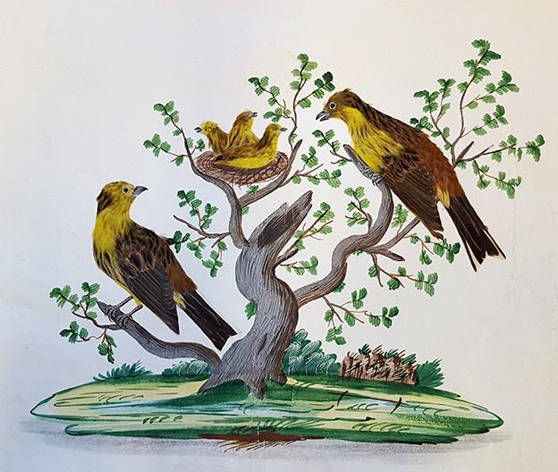 två gulbruna fåglar i ett målat träd tittar på ett bo med tre fågelungar mellan sig