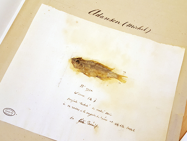 fisken monterad på sitt papper, liggande på sitt omslag