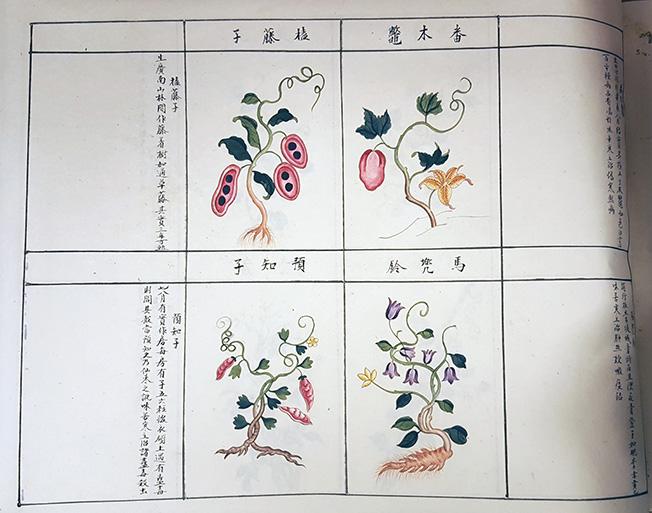 bilder på växter med kinesisk text