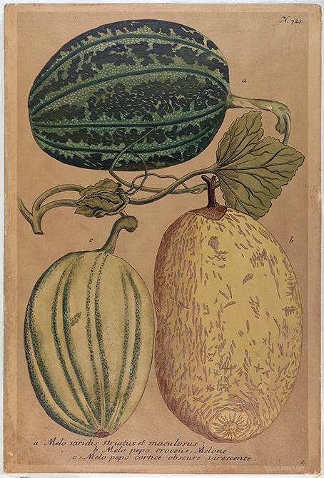 planschblad med tre stycken meloner, en grön, en gul och en gul och grönrandig