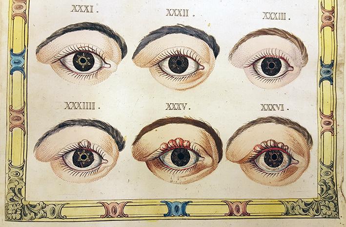 detalj av planschblad med sex ögon med vaglar