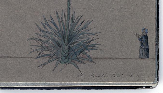 detalj från en större teckning med nederdelen av en agaveväxt och en liten avbildning av Fredrika Bremer i ett hörn