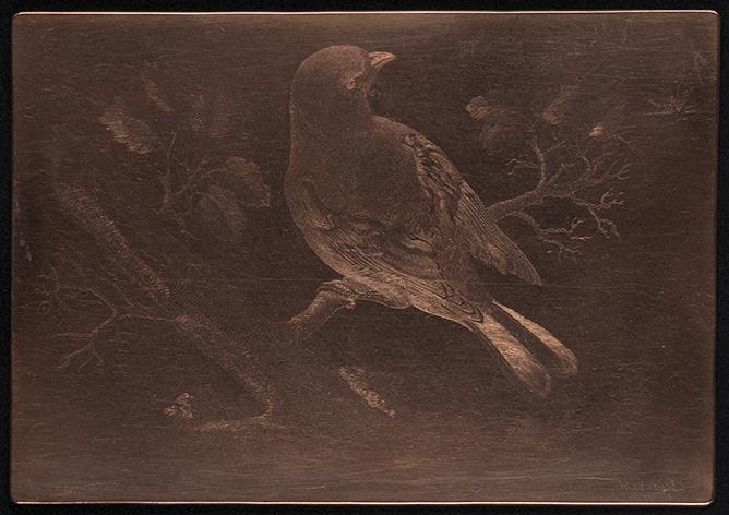 en kopparplåt med en ingaverad fågel sittande på en gren