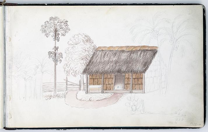 färglagd teckning på en hydda jämte ett papayaträd