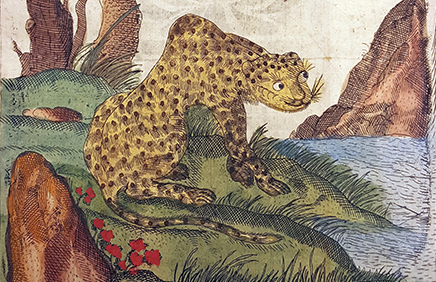detlaj av ett planschblad på en kinesisk leopard