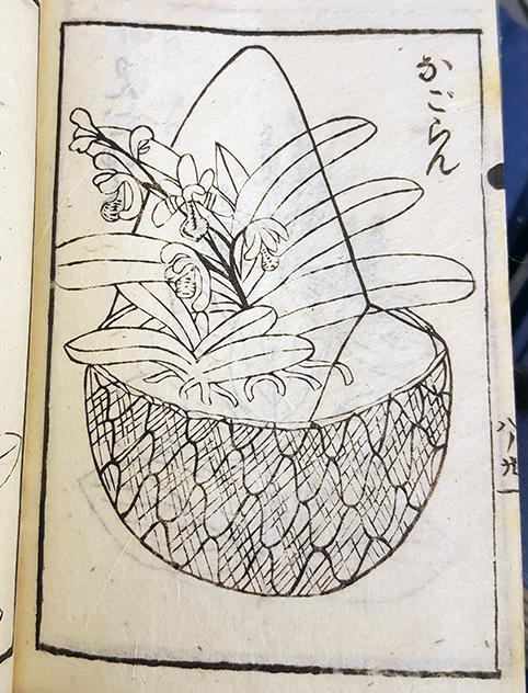 träsnitt av en orkidé i en korg