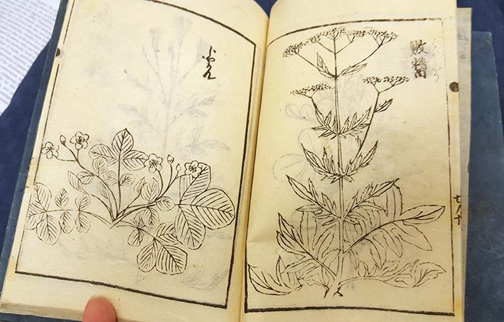 uppslag med två växter i träsnitt
