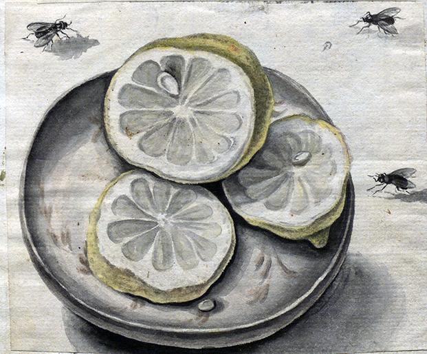 en skål med citroner och flugor