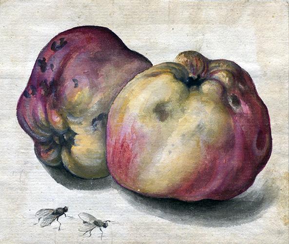 två röda äpplen med två flugor bredvid