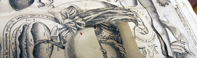 detalj av planschbladet med en kvinnotorso där man kan vika upp en flik och se livmodern