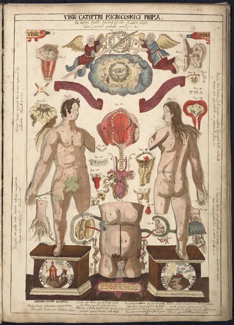 färglagd bild med en man och en kvinna samt flera kroppsdelar