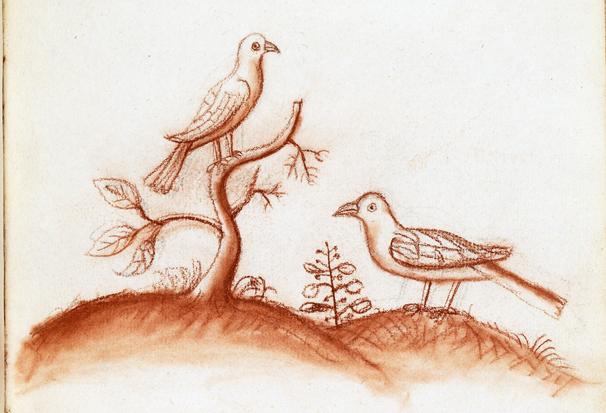 två fåglar tecknade i rödkrita