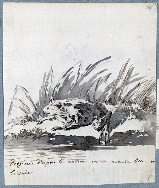 hela teckningen av en groda som vilar i gräset vid vatten