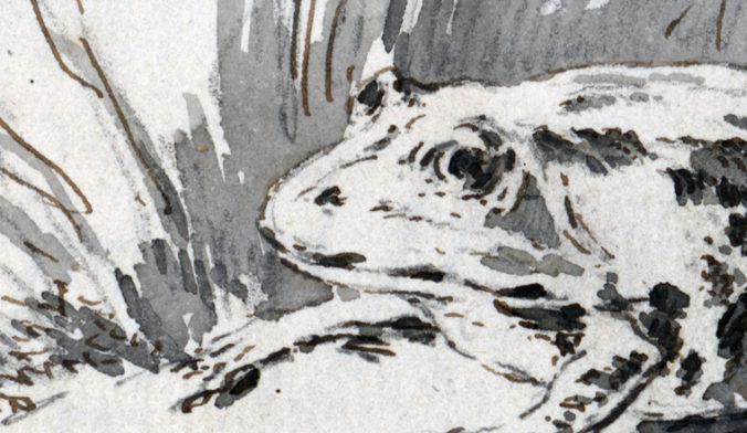 detalj av teckningen med ett huvud på en groda
