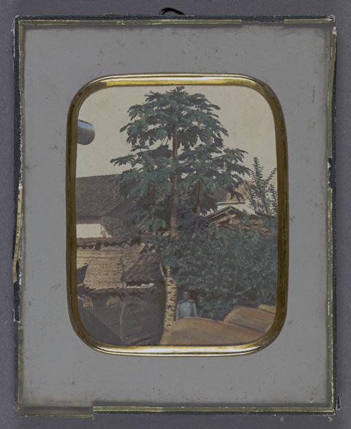 intamat fotografi av ett stort träd