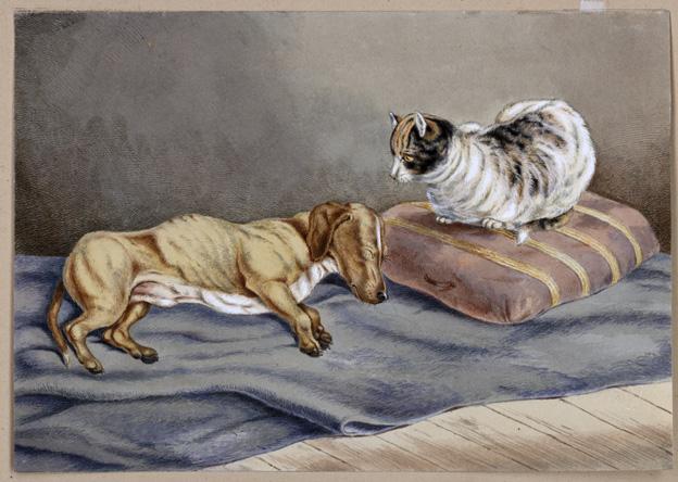 en gul taxliknande hund på en en blå filt, med en sköldpaddstecknad katt tronande på en randig kudde bredvid