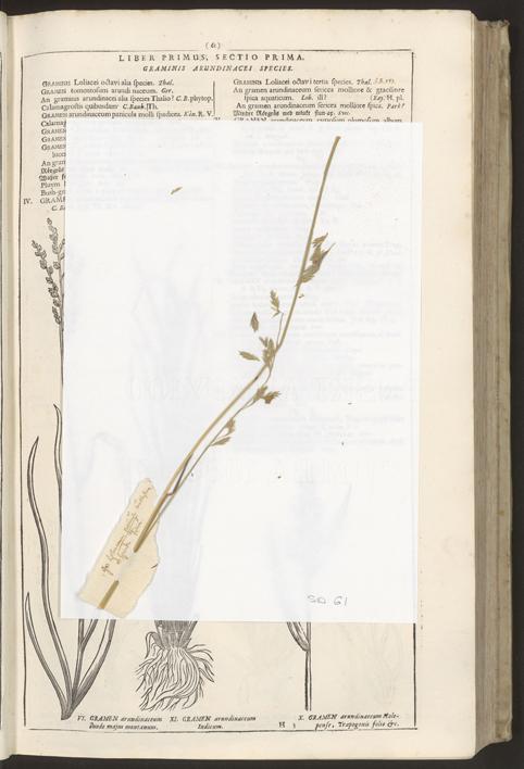 Ett avlängt grässtrå vilar på ett vitt papper ovanpå en uppslagen sida i boken