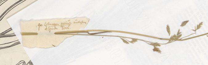 ett torkat grässtrå sitter instucket i en liten lös papperslapp som ser mycket gammal ut