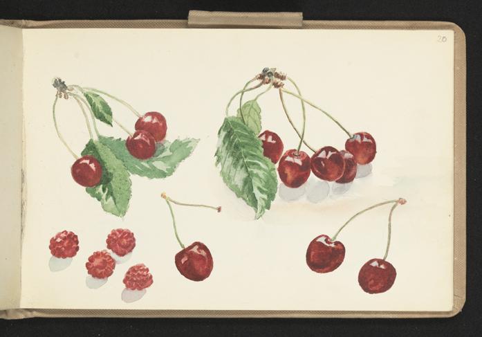 körsbär på sina skaft och hallon