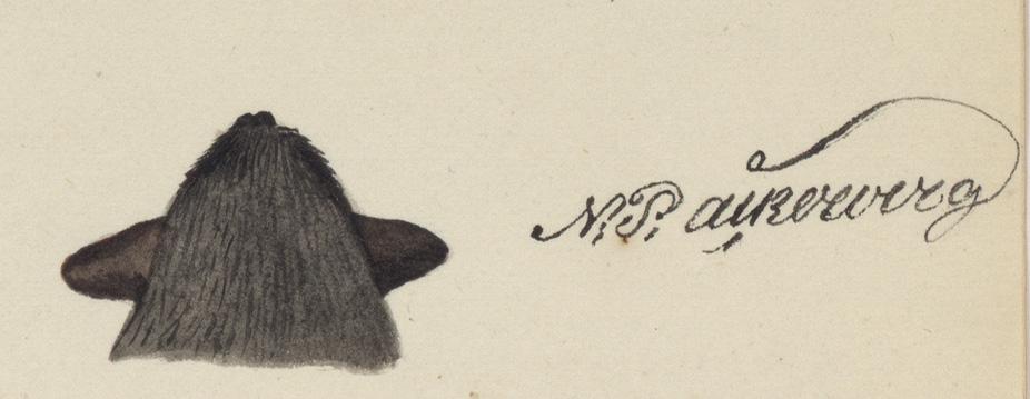 huvudet från ovansidan samt Åckerbergs namnteckning