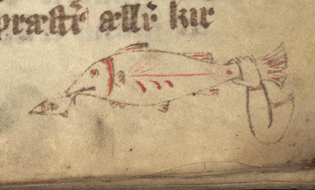 en hand håller fast en fisk i stjärten