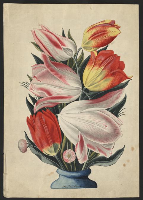 sex tulpaner i olika nyanser av vitt, gult och rött i en blå vas