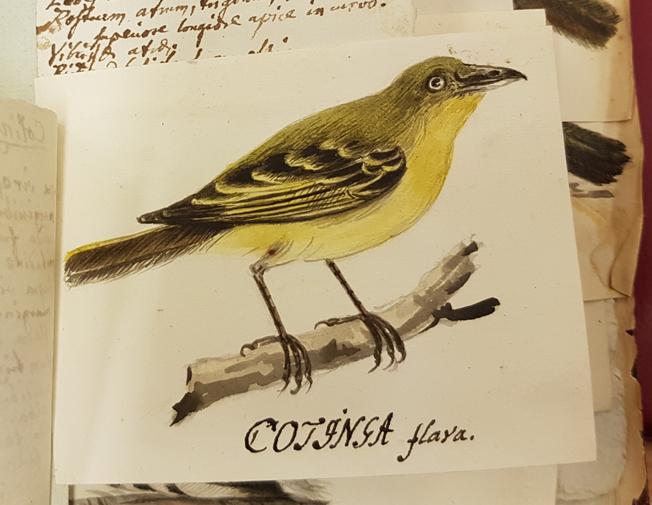 en gröngul fågel med gul mage sittande på en gren